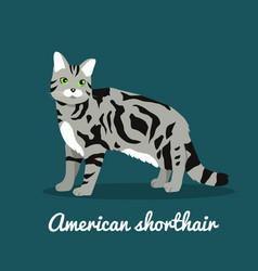 American shorthair cat pet is standing vector
