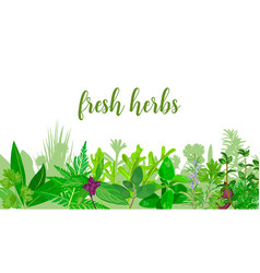 popular realistic herbs and flowers with text set vector image