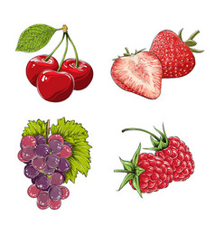set berries in color isolated on white vector image