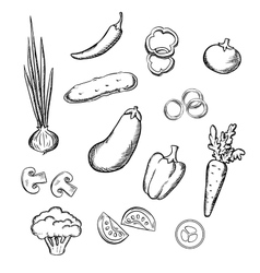 Sketch of fresh whole and sliced vegetables vector