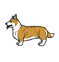 welsh corgi dog in profile vector image