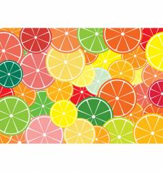 citrus slices multicolored background vector image