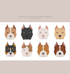 American staffordshire terrier dogs set color vector