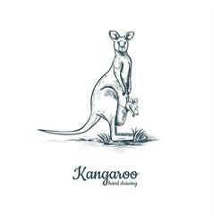 Kangaroo with baby kangaroo baby vector