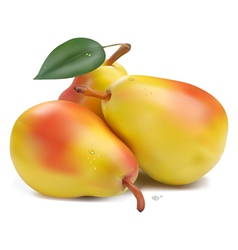 Pears with leaf vector image