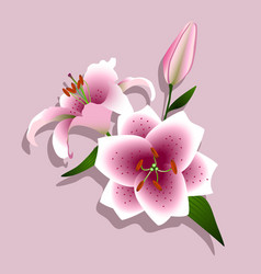 pink lilies on a white background vector image vector image