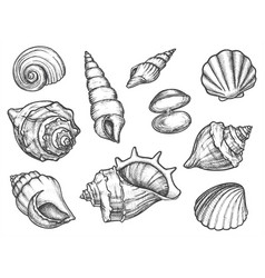 set isolated seashell sketches or conch shell vector image
