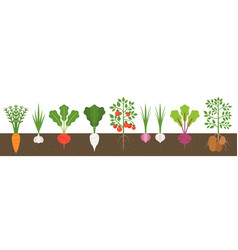 Vegetable with root in soil texture flat design vector