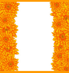 yellow chrysanthemum border isolated on white vector image