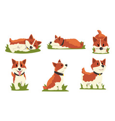 collection brown and white dog in everyday vector image