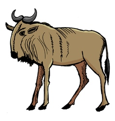 gnu vector image vector image
