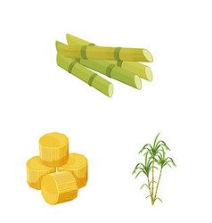 Isolated object sugarcane and cane symbol vector