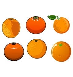 Isolated ripe and juicy orange fruits vector