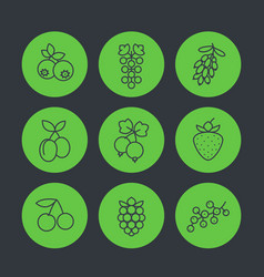 Berries icons set in linear style vector