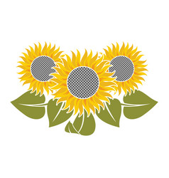 flowers of sunflower vector image