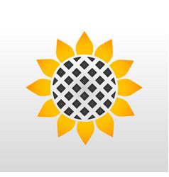 orange sunflower with black seeds vector image