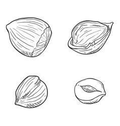 set sketch hazelnuts vector image
