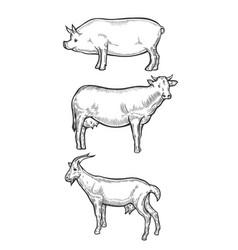 pig farm animal livestock vector image vector image