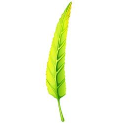 A green elongated leaf vector