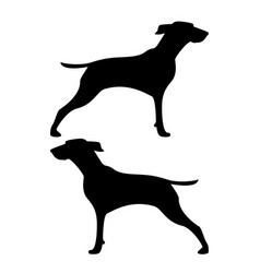 hunter dog or gundog icon black color flat style vector image
