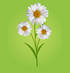 colorful naturalistic beautiful 3d chamomile vector image