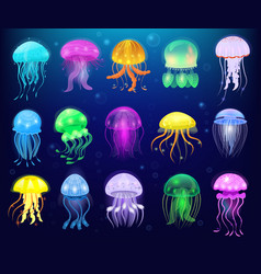 jellyfish ocean jelly-fish or sea-jelly and vector image