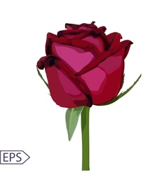 Isolate vintage rose flower vector image