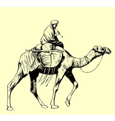 Bedouin riding a camel vector