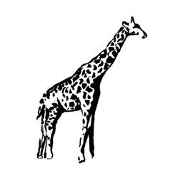 hand drawn of giraffe vector image