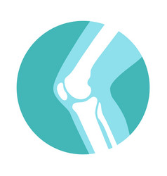 Knee joint vector