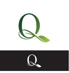 luxury tropical nature leaves letter q logo vector image