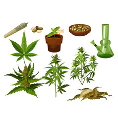 set isolated marijuana leaf and hemp seeds vector image