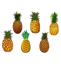 Tropical ripe yellow pineapple fruits vector image