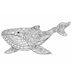 Whale coloring for adults vector image