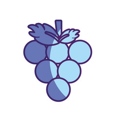Delicious grape fruit icon vector