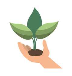 plant sprout icon image vector image