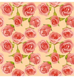 summer background with delicate roses vector image