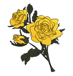 yellow rose on green stem vector image vector image