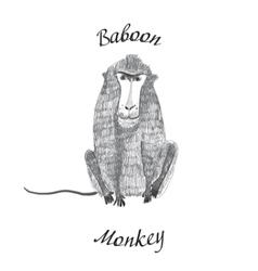 baboon monkey vector image