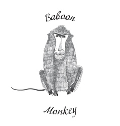 Baboon monkey vector