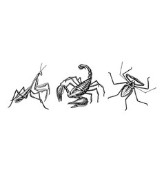big set of insects scorpion whip amblypygi spider vector image