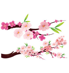 Cherry blossom flowers on branches vector
