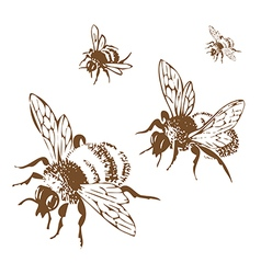 Engraving honey flying bees isolated on white vector