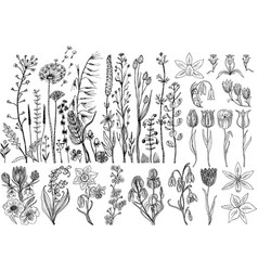 Wild flowers with leaves set of wedding botanical vector