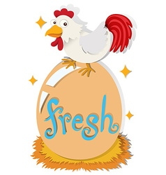 Chicken and fresh egg vector