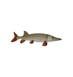 flat icon of large barracuda fish vector image