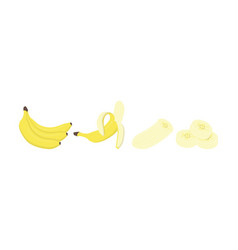 fresh banana fruits in different condition vector image