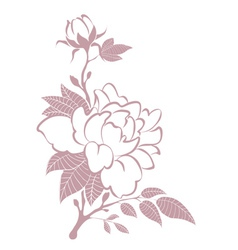 Design element - peonies vector image