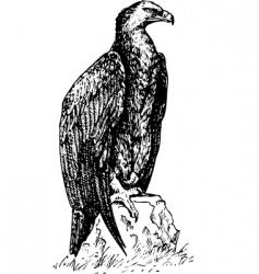bird aquila nipalensis vector image