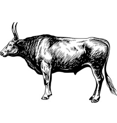 Bullock vector image